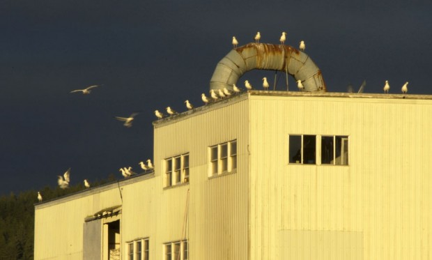 gulls-roost-4132