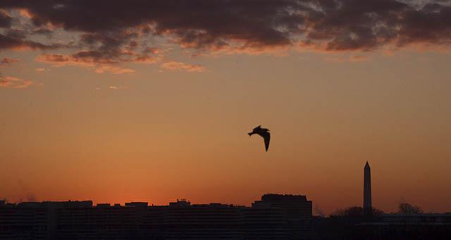 one-gull_0721